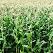 Seed coating can ensure accuracy and uniformity across planting and germination.